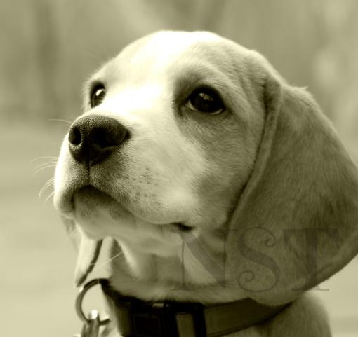 Puppy dog eyes NST