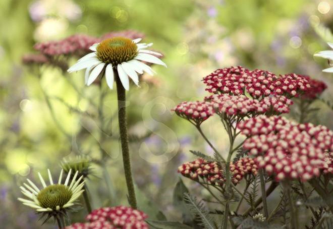 Flowers NST